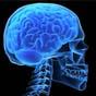 Искусственный костный мозг начнет бороться с болезнями крови