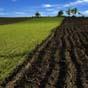 Агрохолдинги сконцентрировали треть сельхозземель в Украине