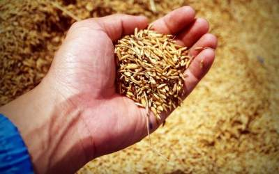 Стало известно, сколько Украина заработала на экспорте зерна