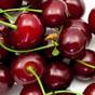 В Украине хотят снизить налоги на ягоды, орехи и виноград