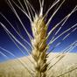 Украина за год экспортировала 40 миллионов тонн зерна