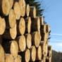 Парламент криминализировал незаконный вывоз из Украины леса и дров