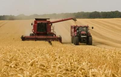 Минагрополитики повысило прогноз урожая до рекорда
