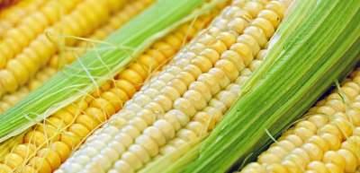 В Украине построят крупный завод по переработке кукурузы