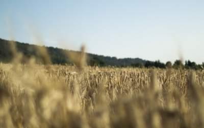 Украина получила рекордную прибыль от экспорта зерна